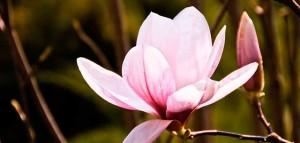 magnolia-brunch-header